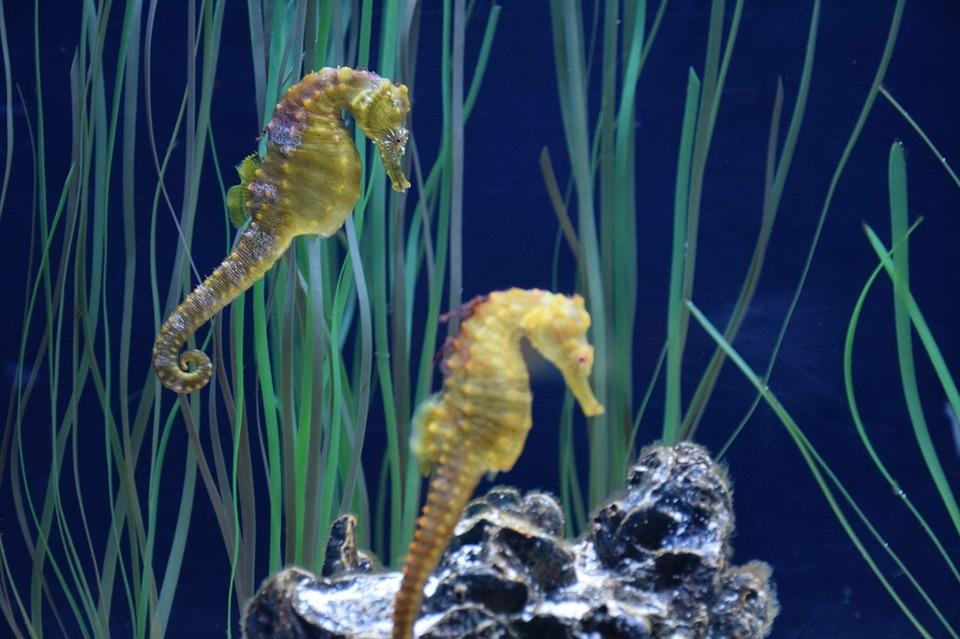 aquarium-1229099_960_720